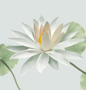 home_metiss_lotus2
