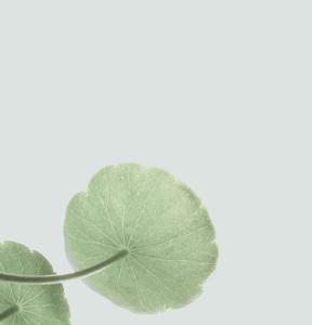 home_metiss_lotus3
